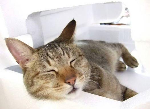 夏と冬の寝室は温度と湿度を調節して眠りの質を高めましょう