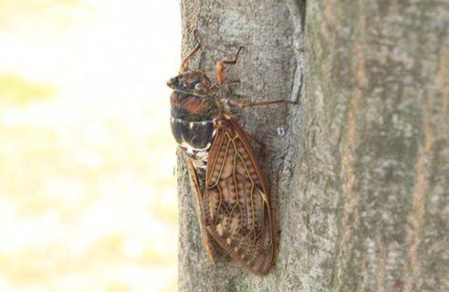 昆虫は人間には見えない「紫外線」が見えています