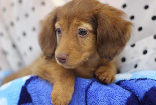 愛犬と暮らすためのフローリング選び